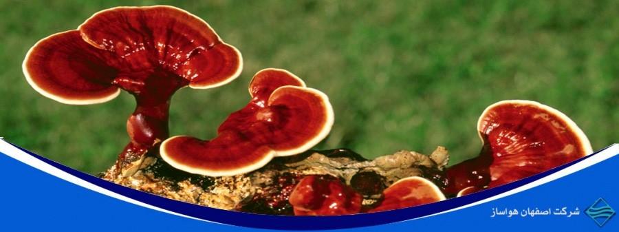 نقش دستگاه رطوبت ساز در پرورش قارچ گانودرما