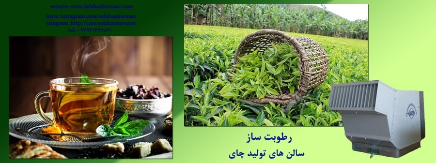 نقش دستگاه رطوبت ساز در تولید چای