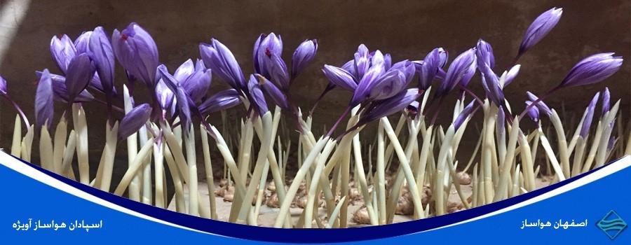 کاربرد دستگاه رطوبت ساز در پرورش زعفران